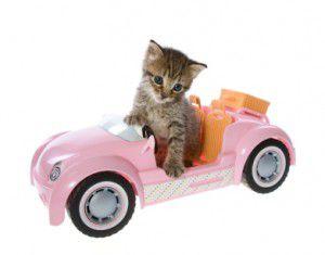 cat-in-car-300x235
