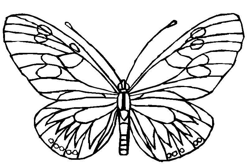 puzzles coloring pages pulloverandletmeoutcom - Rainforest Insects Coloring Pages