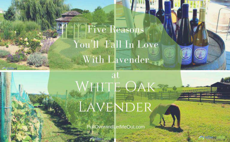 Five Reasons You'll Fall in Love With Lavender at White Oak Lavender