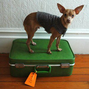 dog on suit case