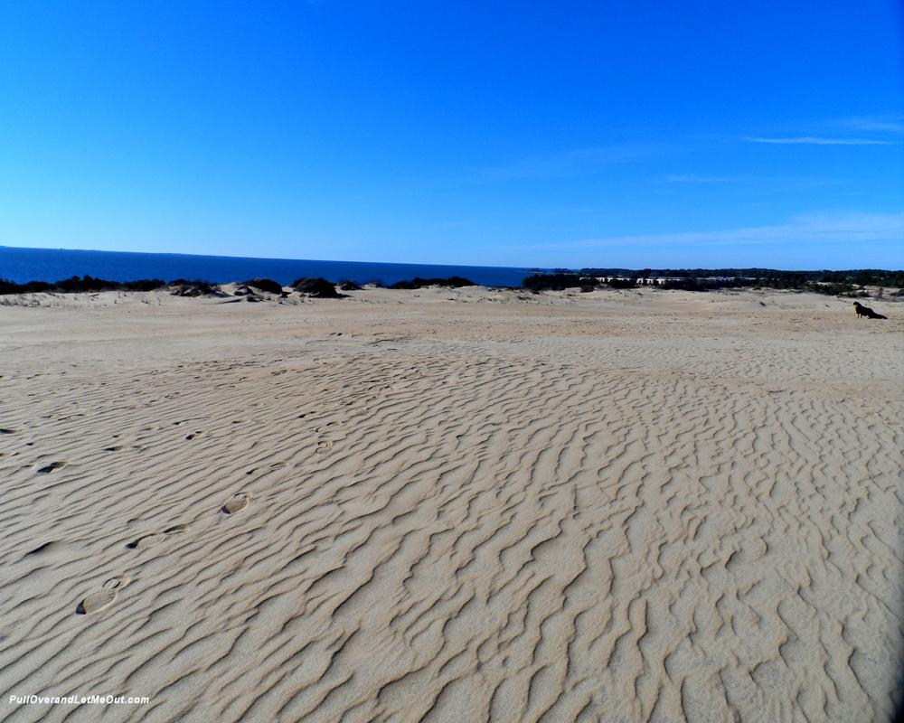 top-of-the-dunes