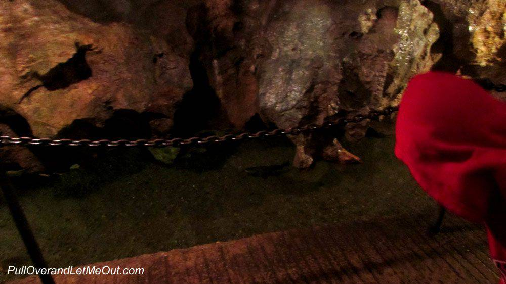 Trout-in-the-cavern