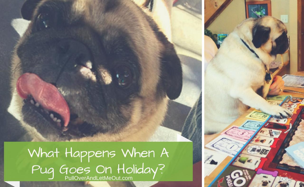 Pet Travel Pug PullOverAndLetMeOut (1)