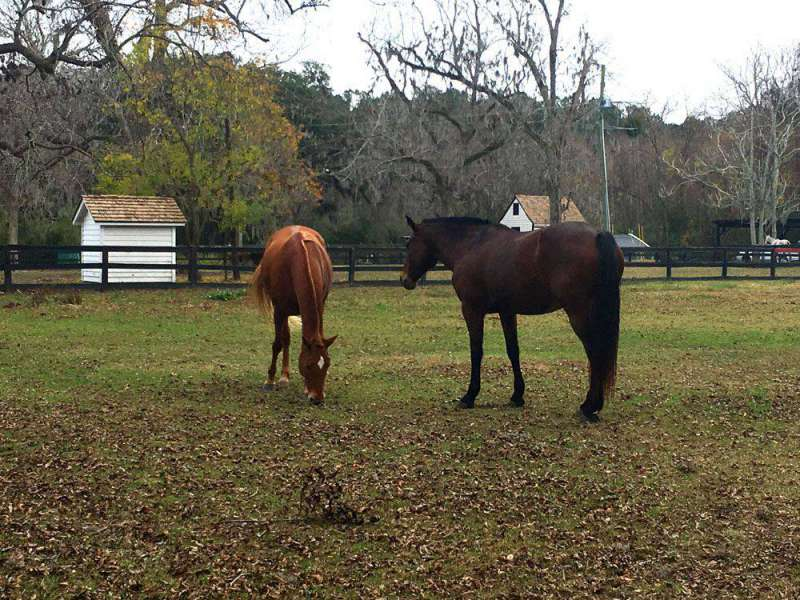 Horses-at-stables-Boone-Hal