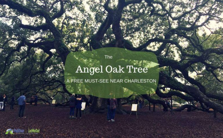 The Angel Oak Tree Near Charleston; a Free Low Country Favorite
