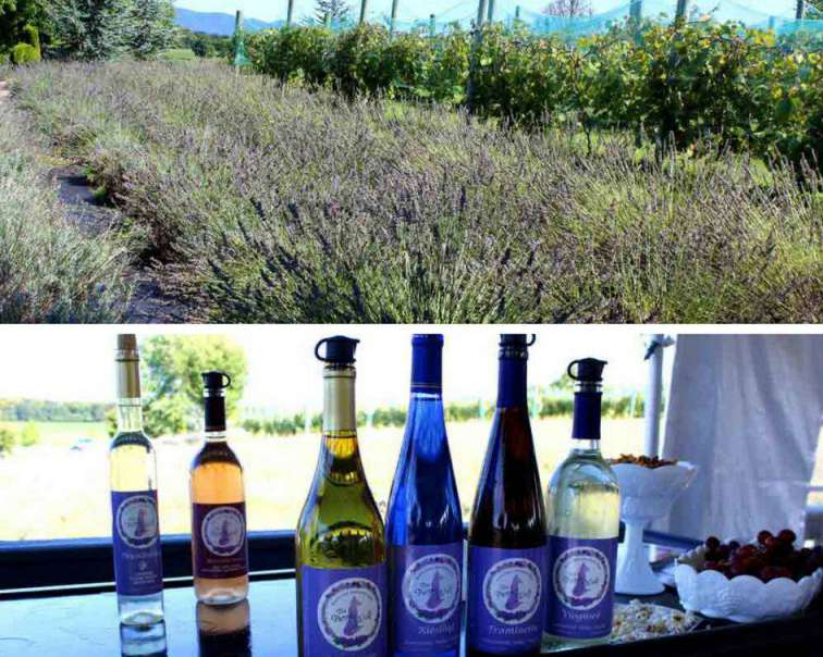 White Oak Lavender Farm Harrisonburg-Rockingham Artisan Trail PullOverandLetMeOut