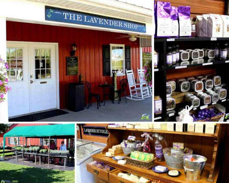 Lavender Shop White Oak Lavender Farm PullOverandLetMeOut
