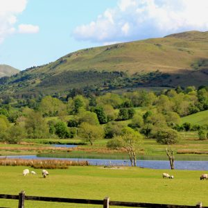 Glencar sheep by the lake Visit Ireland Now PullOverAndLetMeOut