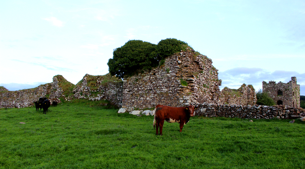 Moygara Castle Cow Visit Ireland PullOverAndLetMeOut