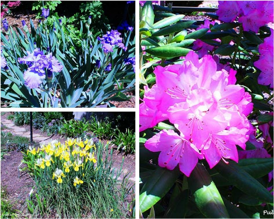 JC Raulston flowers PUllOverandletMeOUt