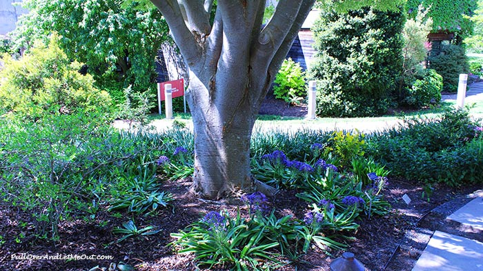 tree-JC-Raulston-Arboretum-Raleigh-PullOverAndLetMeOut