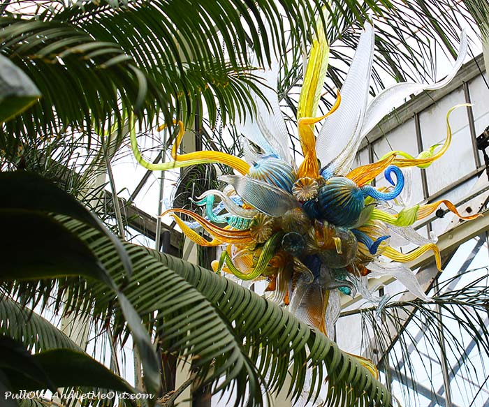 Chihuly at Biltmore features the magnificent glass art work of Dale Chihuly. #PullOverAndLetMeOut #ChihulyAtBiltmore #Chihuly #Biltmore #travel #art #artexhibit