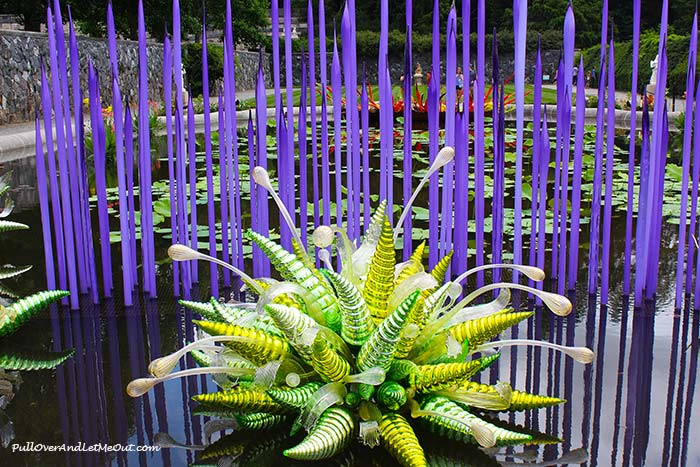 Chihuly at Biltmore features some beautiful glass art by renowned artist, Dale Chihuly. The artwork is enhancing the gardens and other areas of this iconic estate. #PullOverAndLetMeOut #ChihulyAtBiltmore #Chinuly #Biltmore #Asheville #travel #visitNC #NorthCarolina #art #glasswork