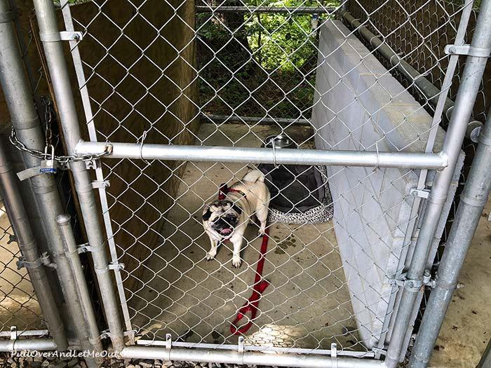 Biltmore-dog-friendly-kennels-PulloverAndLetMeOut