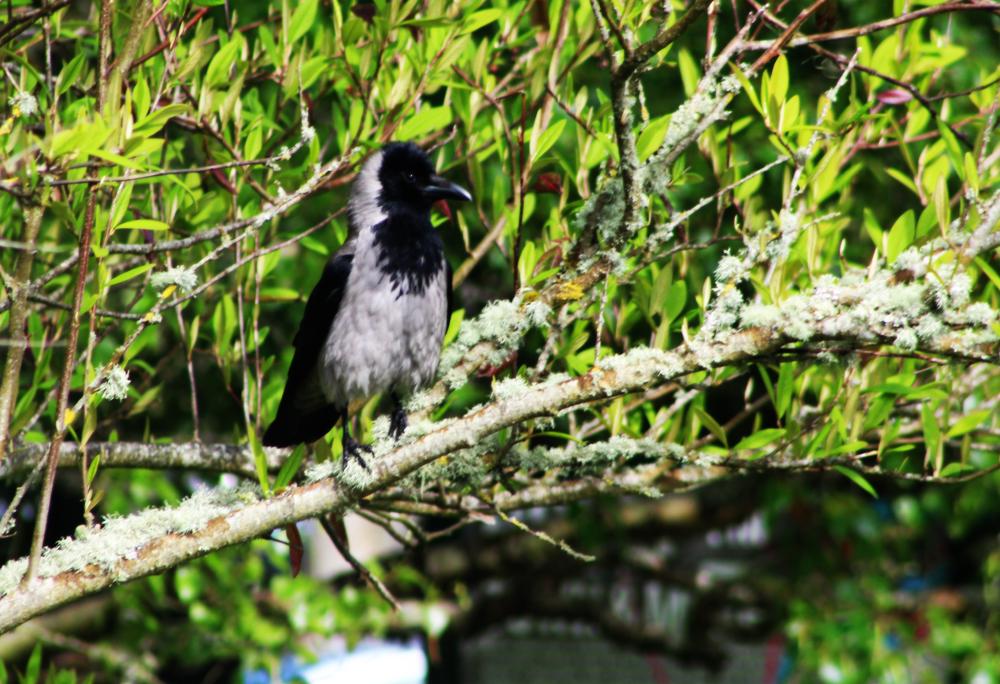 bird at Lough Key Ireland PullOverAndLetMeOut