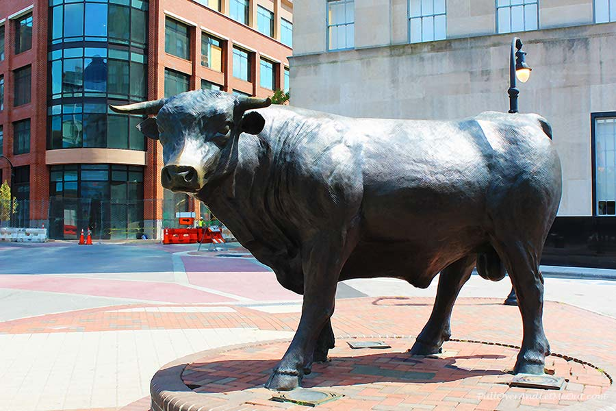 Bull-filtered-Durham-Street-Art-PullOverAndLetMeOut