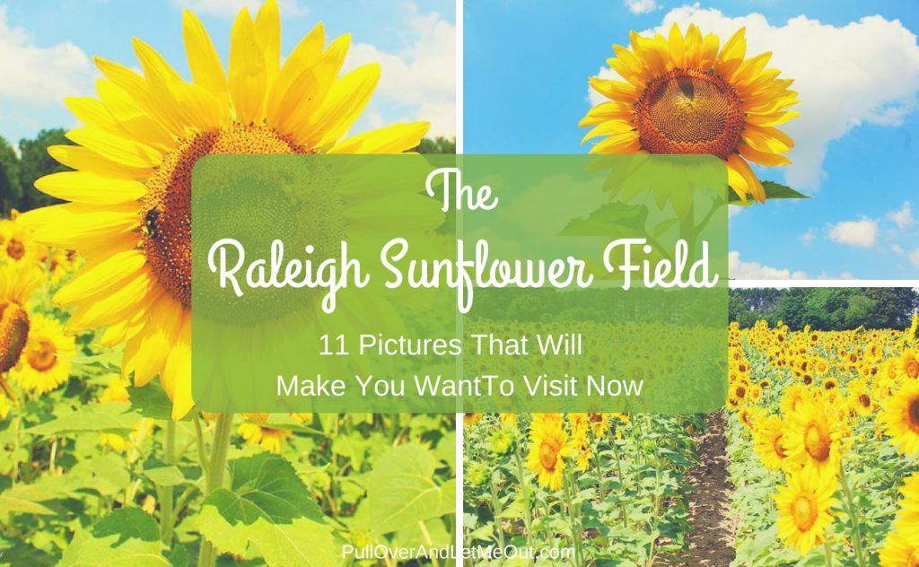 Raleigh Sunflower Field PullOverAndLetMeOut.com