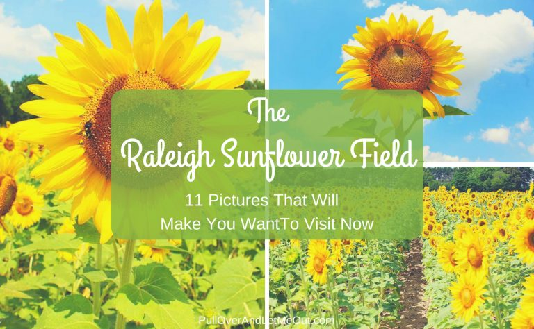 The Raleigh Sunflower Field, 11 Pictures That Will Make You Want To Visit Now