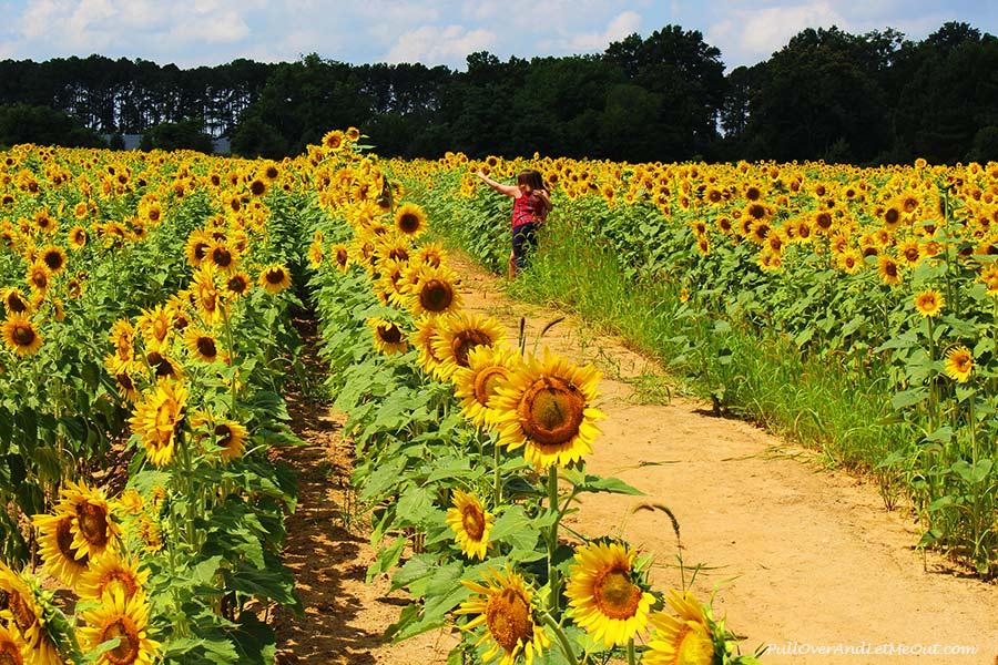 Selfies-Dix-Sunflower-Field-Raleigh-PullOverAndLetMeOut