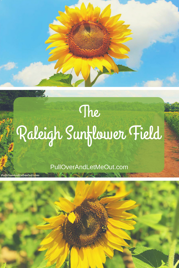 Between mid-June and mid-July, something magical happens in Raleigh, North Carolina. Rows and rows of glorious sunflowers appear. What started as acres of sunflowers planted along the Neuse River Greenway Trail has for now found a new home close to downtown in the Dorothea Dix Park. #PullOverAndLetMeOut #Travel #Raleigh #NorthCarolina #Sunflowers #Annual #blooms #OakCity #DorotheaDixPark