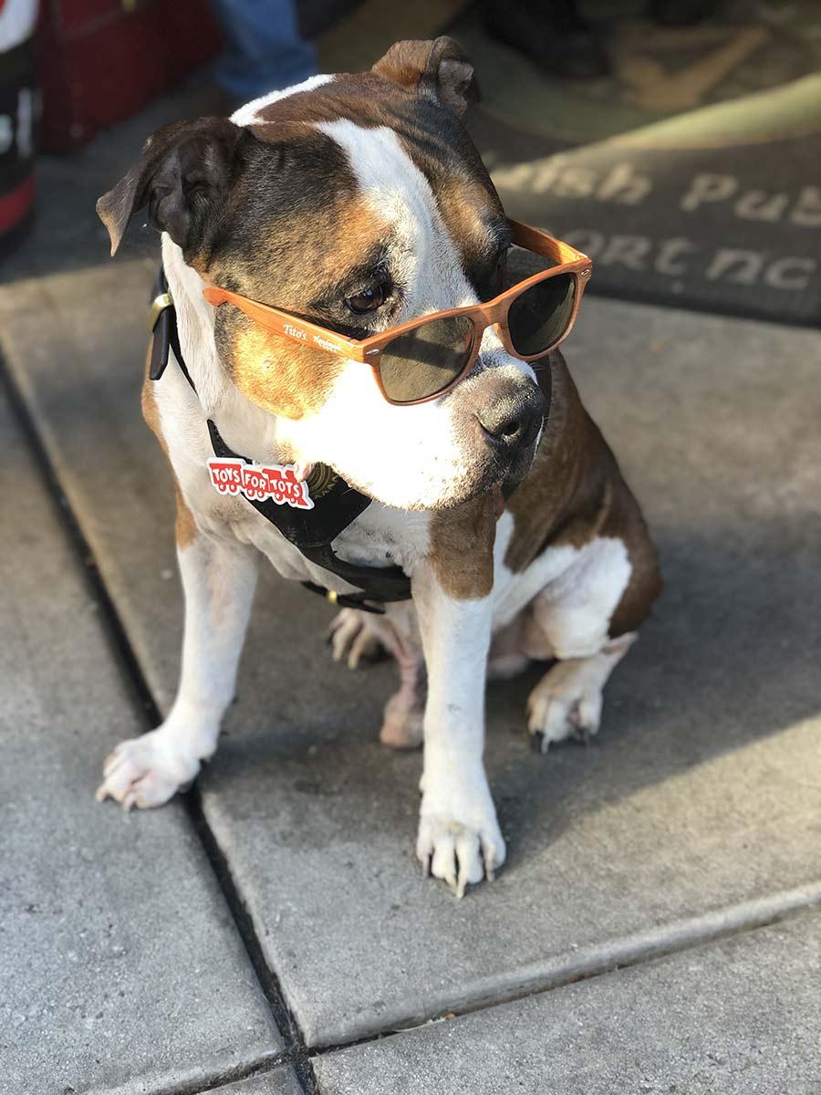 Hollywood-Walk-dog-at-Irish-pub-Wilmington-PullOverAndLetMeOut