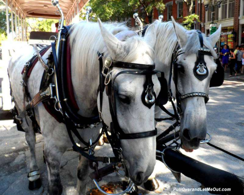 Mike-and-Harry Wilmington Carriage Ride