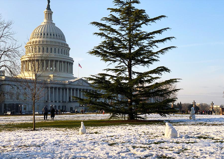 Capitol-Snowmen-Washington,-DC-PullOverAndLetMeOut
