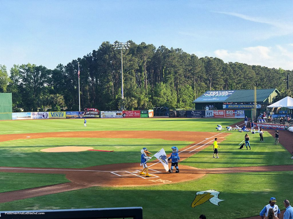 Myrtle-Beach-Pelicans-Splash-and-Rally-Shark-PullOVerAndLetMeOut
