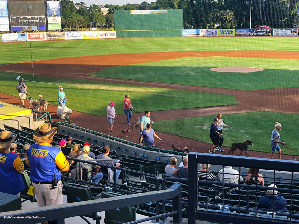 Myrtle-Beach-Pelicans-dog-parade-PullOverAndLetMeOut