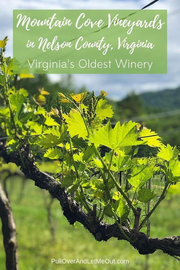 Mountain Cove Vineyards in Nelson County, Virginia is the states oldest winery. PullOverAndLetMeOut.com