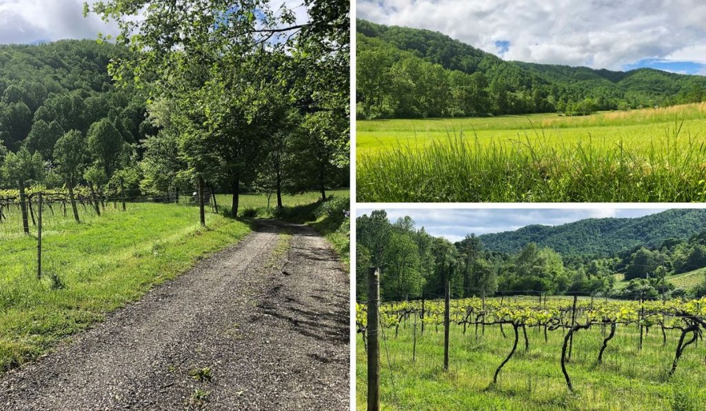Mountain Cove Vineyards in Nelson County, Virginia and the lush green scenery are a picture postcard of Virginia wine country. PullOverAndLetMeOut.com