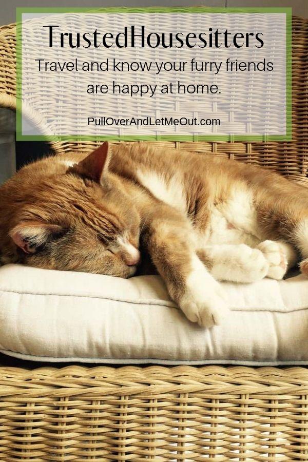 Cat sleeping in a basket. PullOverAndLetMeOut.com TrustedHousesitters