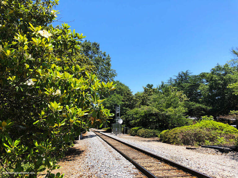 Magnolia tree lined rail road tracks