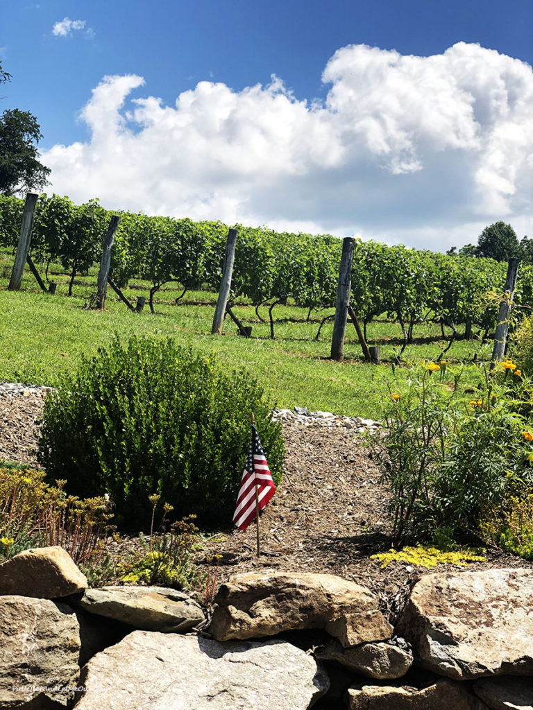 grapevines at Linville Falls Winery