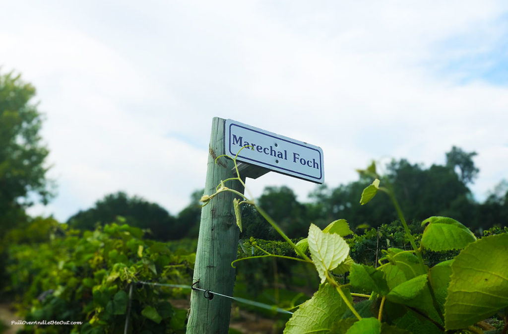 Name marker in vineyard at Mac's Creek