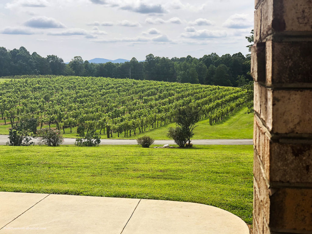 view of vineyard at Stony Knoll Vineyards