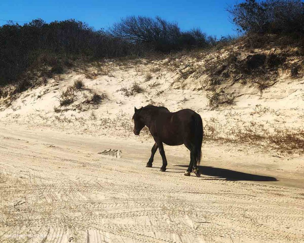 a wild horse walking on the sand