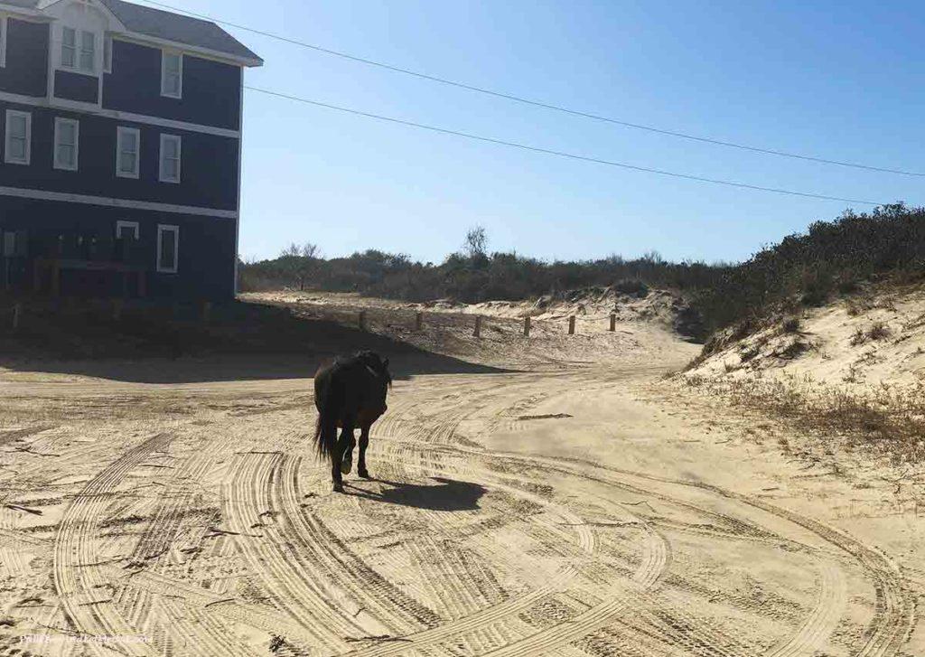 a wild horse walking on the beach sand