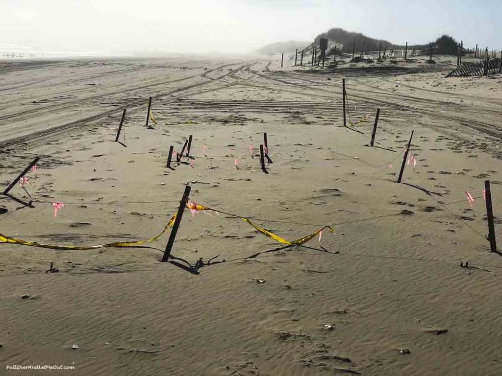 A sea turtle nest marked off with stakes on a beach
