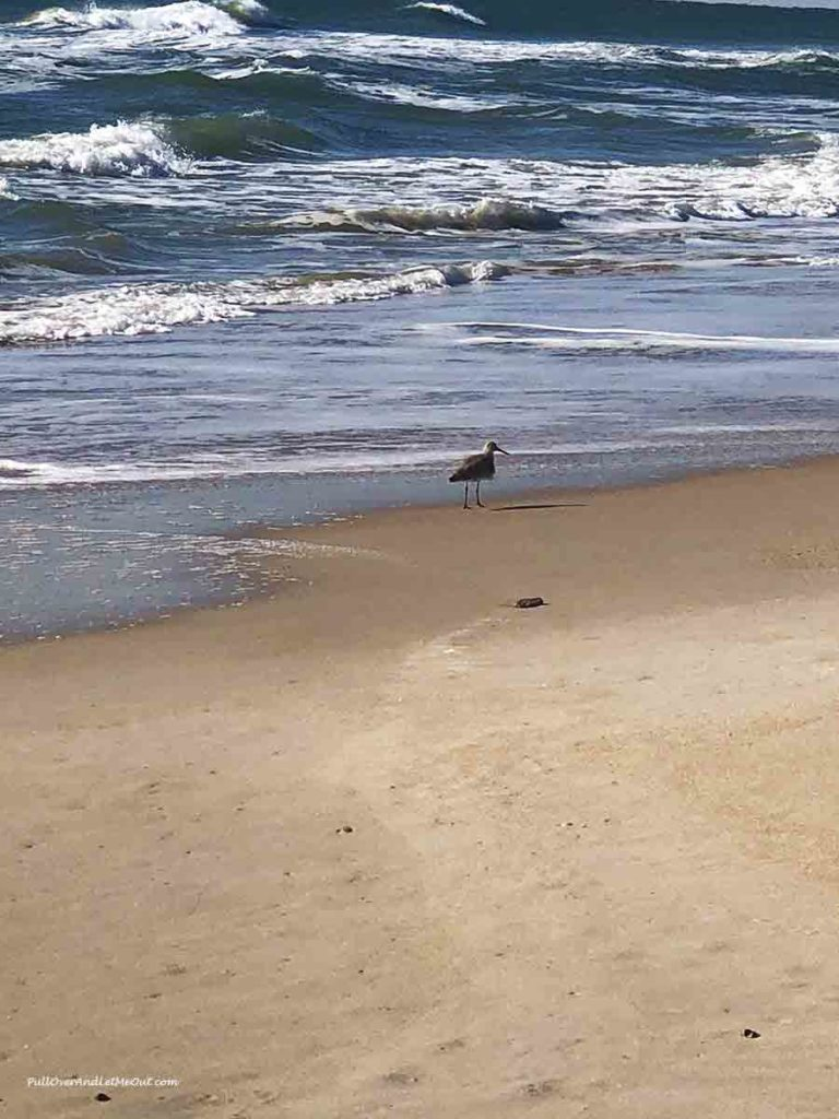bird standing in the sand on a beach