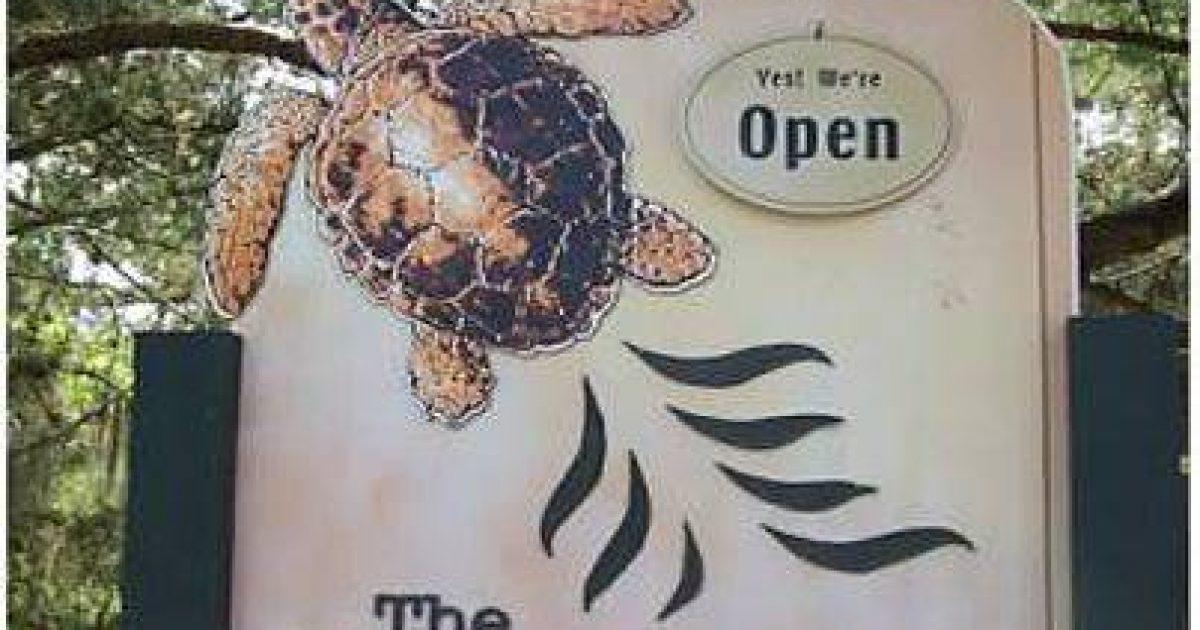 Georgia-Sea-Turtle-Center-4