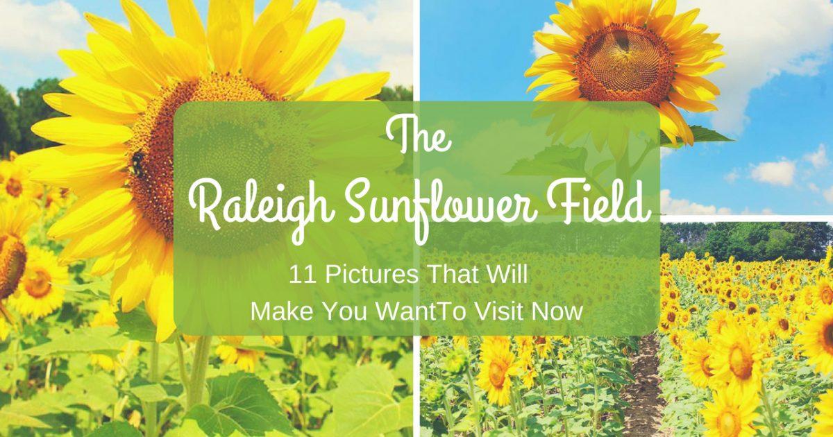 Raleigh Sunflower Field PullOverAndLetMeOut.com