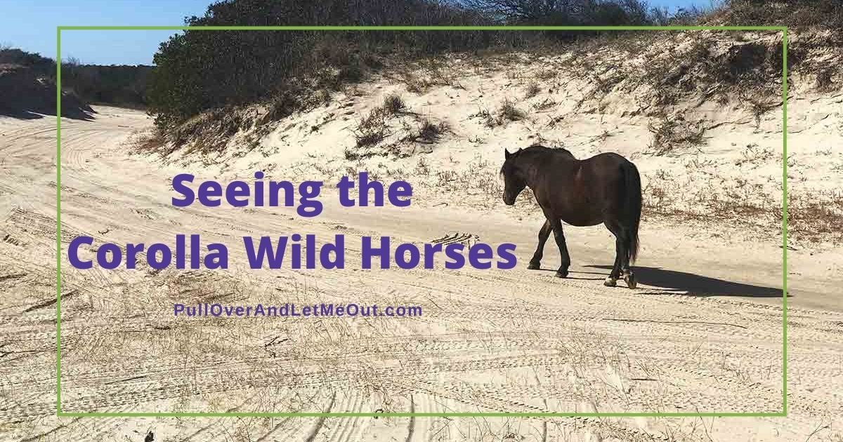 Seeing the Corolla Wild Horses Is an Outer Banks Must! PullOverAndLetMeOut